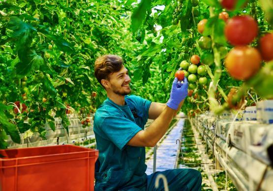 seasonal-farm-laborers